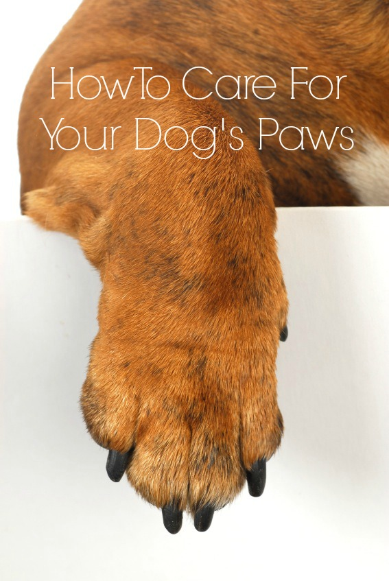 Pet Pads For Dogs
