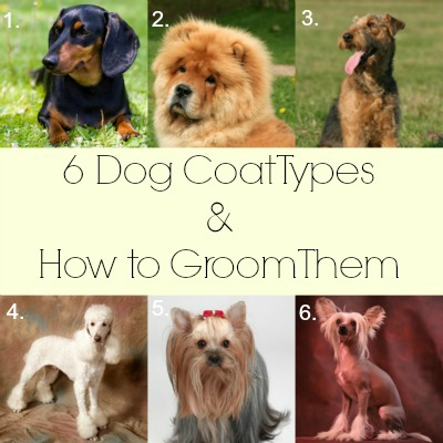 6 Dog Coat Types and How to Groom Them - Cowboy Magic